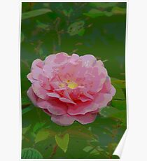 Pink Rose Wall Art  Poster