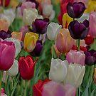 Illuminating Tulip by BodyIllumin