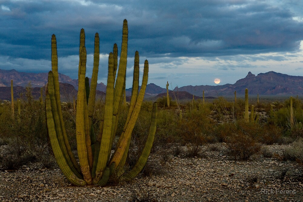 Organ Pipe Cactus and Moonrise by Rick Ferens