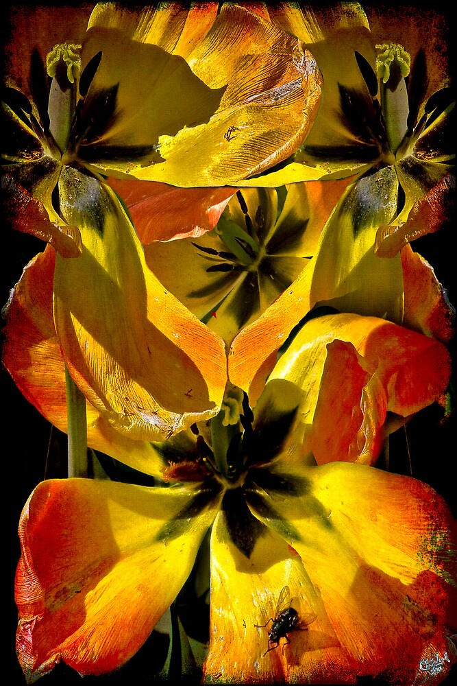 A Fantasy Tangle of Aging Tulips by Chris Lord