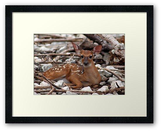 New born deer by DBArt