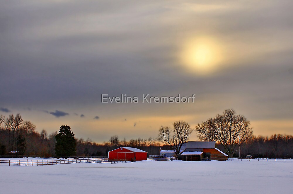 Winter Sun  by Evelina Kremsdorf