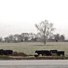 Field O' Moo by AARose