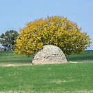 Rock and Tree in Meadow by Stuart Row