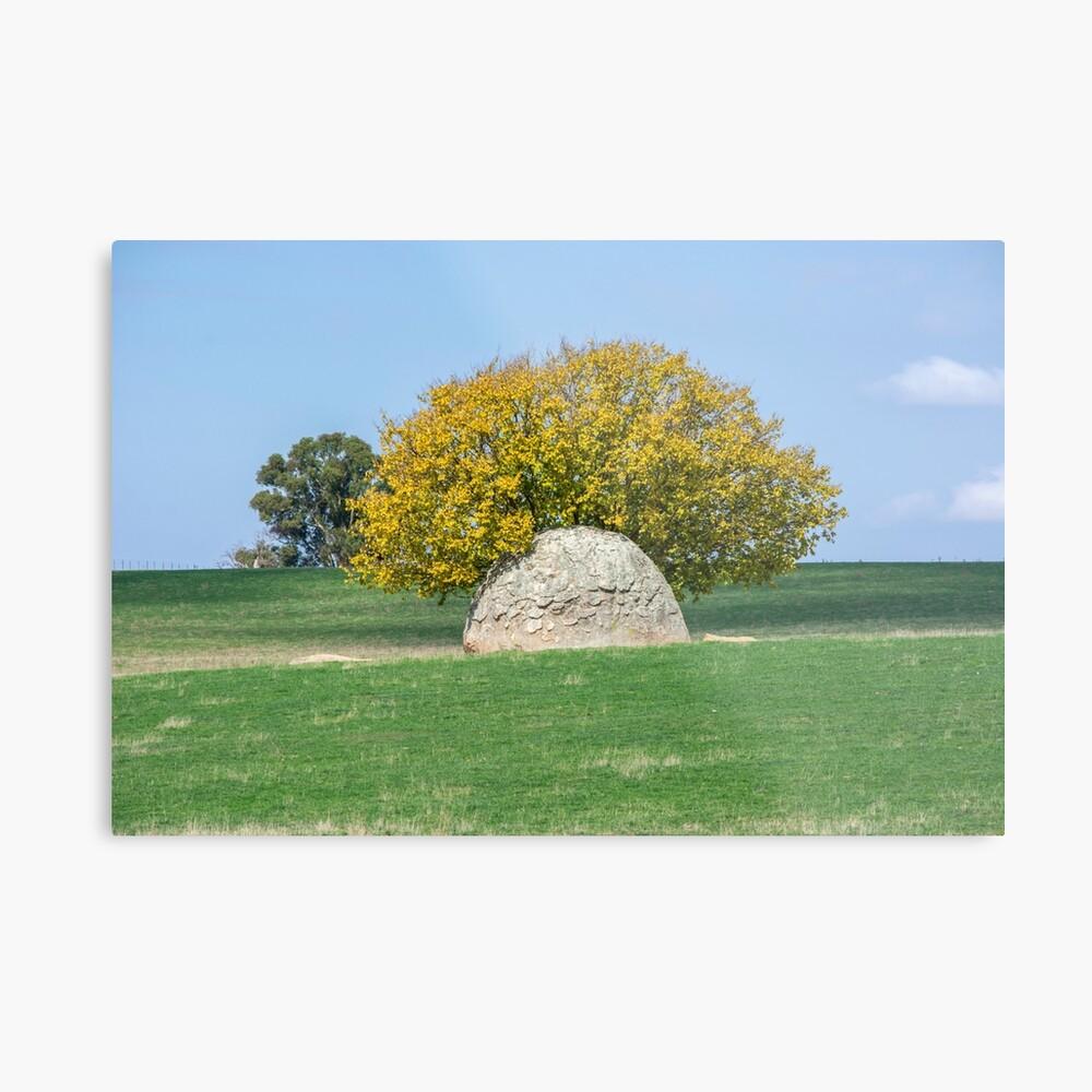 Rock and Tree in Meadow Metal Print