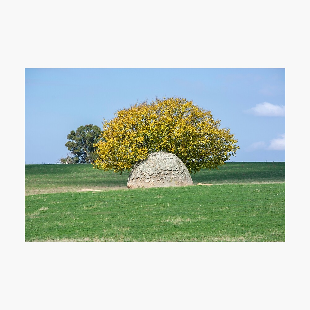 Rock and Tree in Meadow Photographic Print