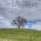 Oak Tree Solitaire by Diego Re