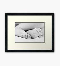little piggies... Framed Print