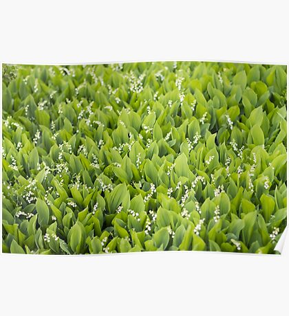 Beautiful Lily of the Valley flowers Poster