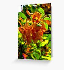 Orange Rhododendron Greeting Card