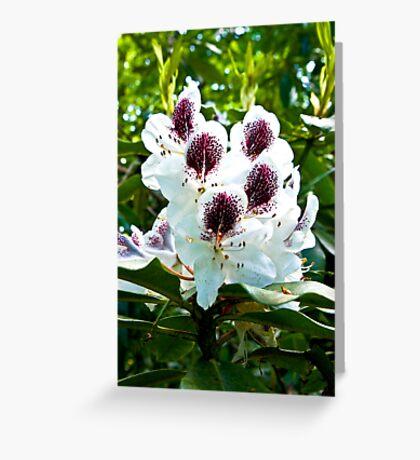 Speckled Rhodie Greeting Card