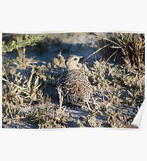 Nestling bird Poster