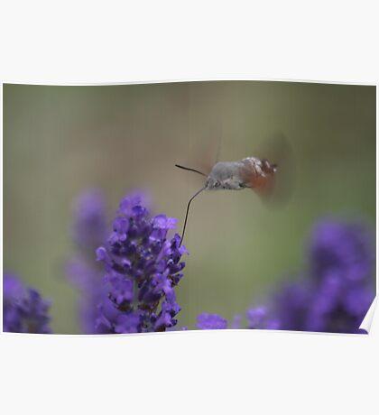 Speedy Nectar Collector  Poster