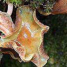 nice mushroom by Manon Boily
