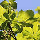 Frühlingsgrün von cuprum
