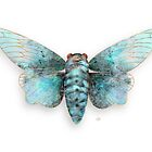 White Ghost Cicada by Karin Taylor