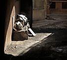 Sunny Garbage by Farfarm
