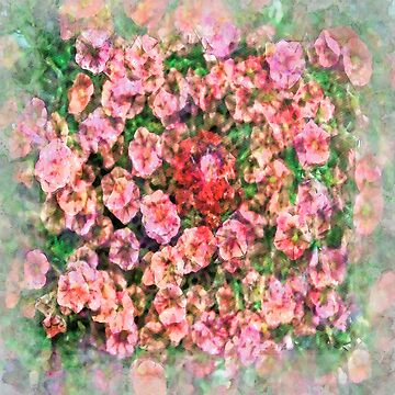 Pink Petunias by mrthink