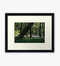 Courtmacsherry Bluebells Framed Print