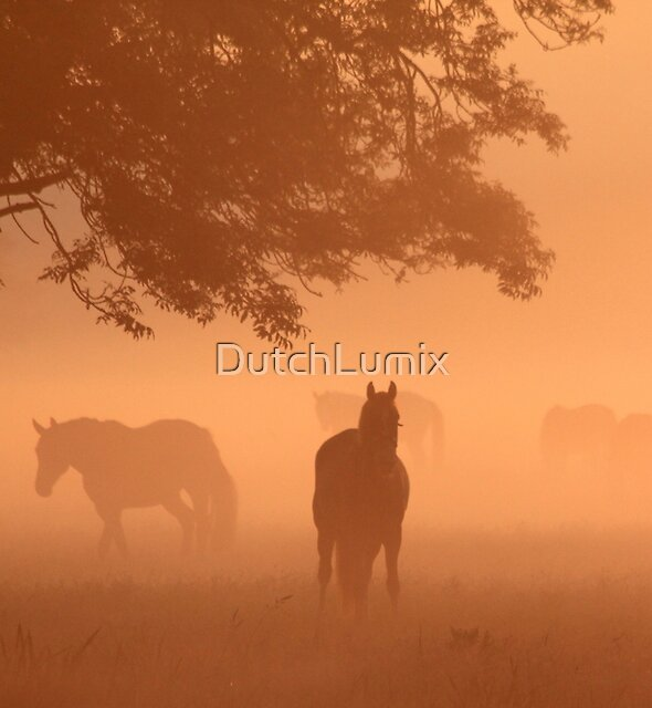 Horses in the fog by DutchLumix