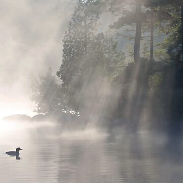 A Loon In The Mist by bpelkey1