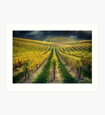 In Vino Veritas IV Art Print