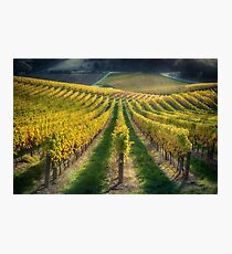 In Vino Veritas IV Photographic Print
