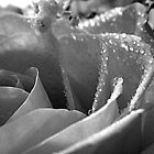 Rose Series 2 - Black and White by ctheworld
