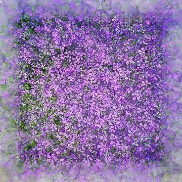 Violet Heliotrope Haze by mrthink