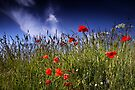 Papaver Sky by Andy Freer