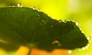 after the rain by Ingrid Beddoes