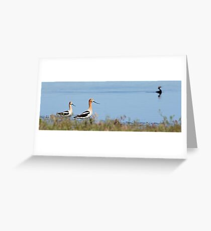 Graceful Pair in the Desert (pan) Greeting Card