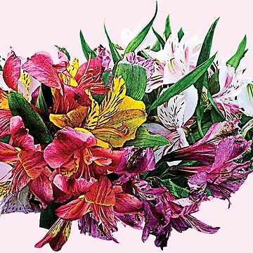 Asiatic Lilies Mixed Colors by SudaP0408