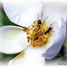 Nectar Seekers by Mattie Bryant