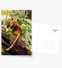 Goodfellows' Tree Kangaroo Postcards