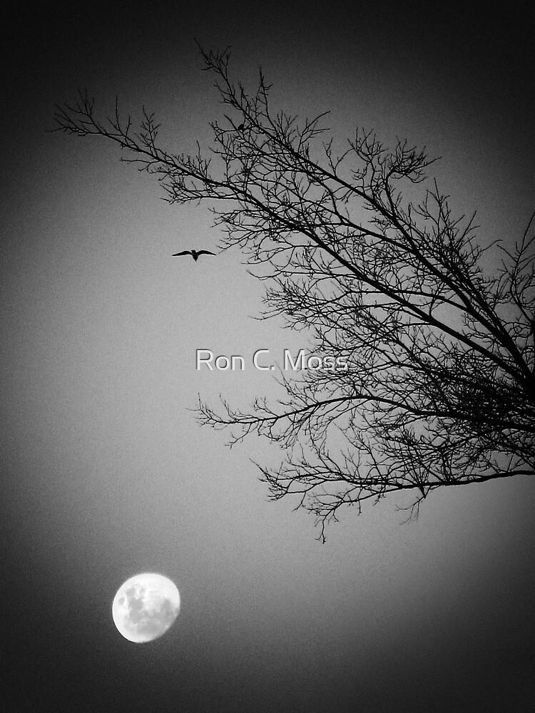 Night Flight  by ronmoss