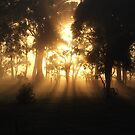station sunrise on upsan downs by spiritofthebush