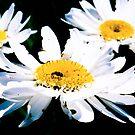 Daisey's Bugs by Nancy Stafford