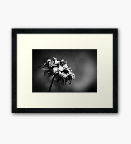 #7 Framed Print