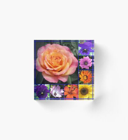 Blumen der Sommer-Collage, die leuchtende Rosen-Schönheit kennzeichnet Acrylblock