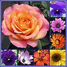 Blumen der Sommer-Collage, die leuchtende Rosen-Schönheit kennzeichnet von BlueMoonRose