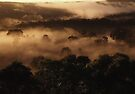 "'Cocoa Dawn"" by debsphotos"
