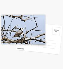 White-fronted Chat Postcards
