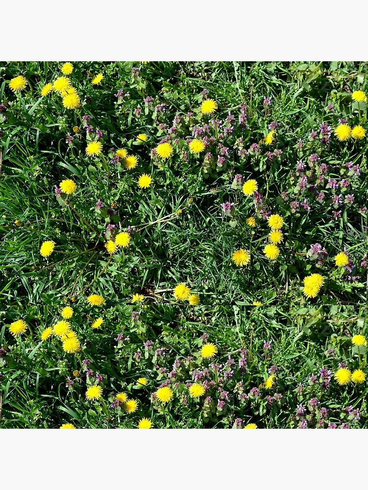 Dandelions by starchim01