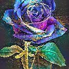 Blue Moon Rose von Kestrelle