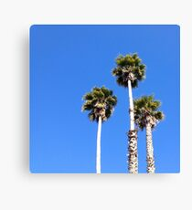 Santa Cruz Palm Trees Canvas Print