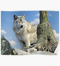 Watching Over the Pack Poster