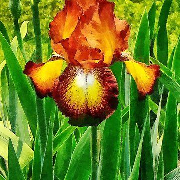 Spreckles Iris by SudaP0408