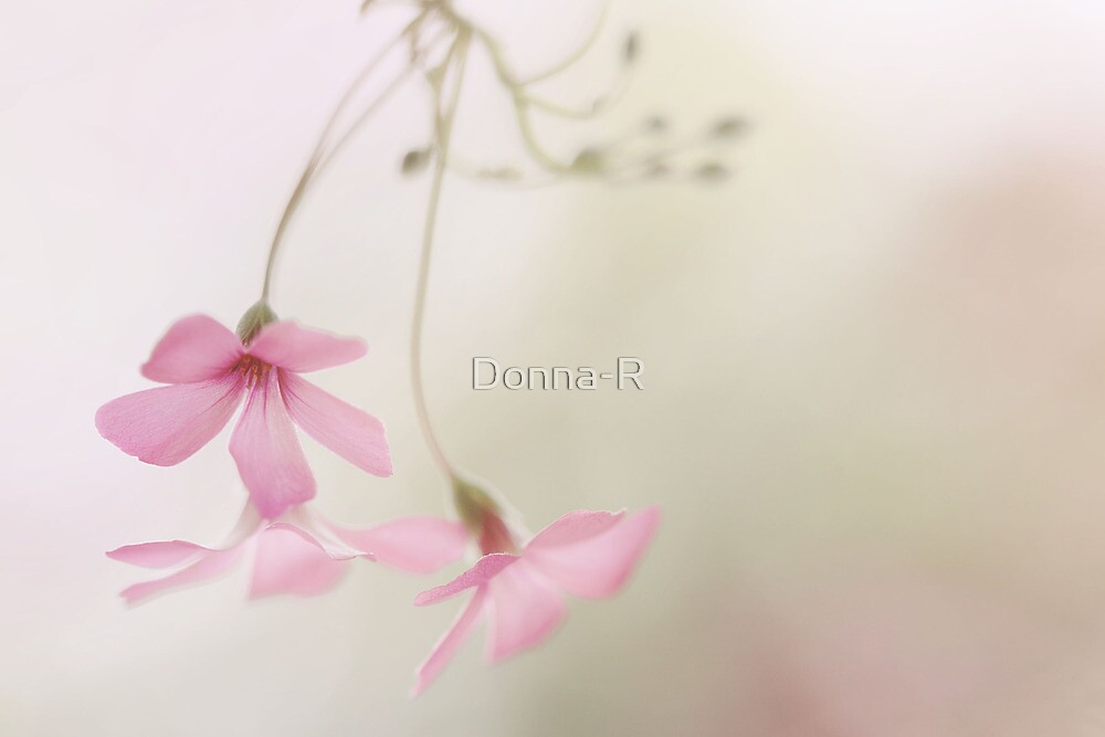 Dreaming in Softness by Donna-R
