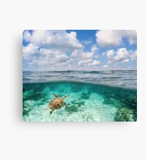 Over Under Shot, Green Sea Turtle Canvas Print